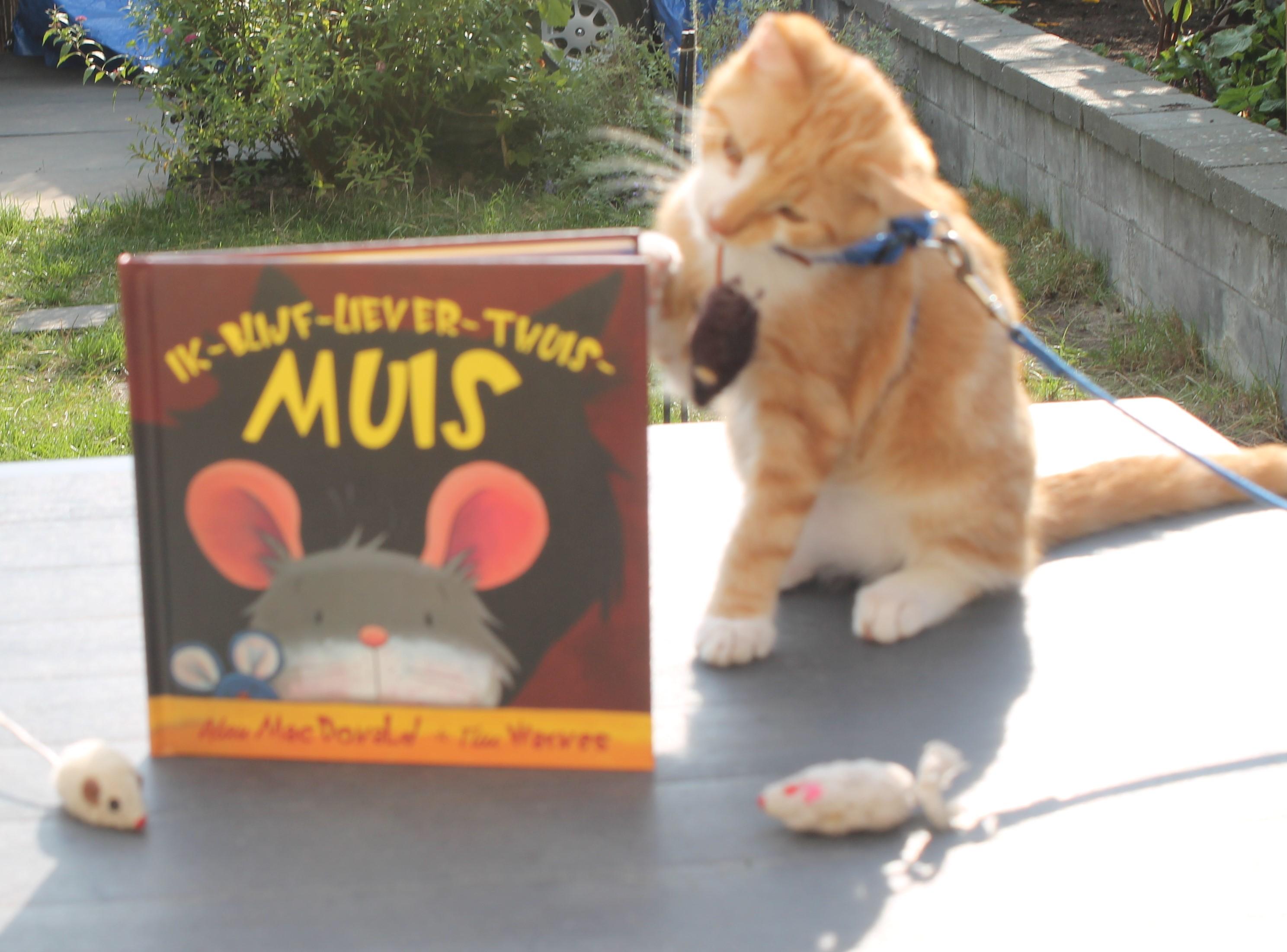 Ik-blijf-liever-thuis-muis